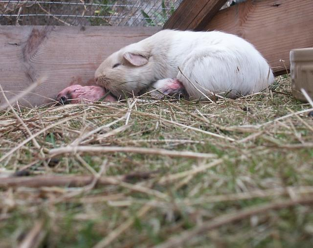 Images Of Baby Pigs